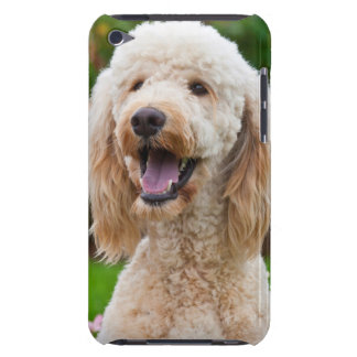 USA, California. Portrait Of Labradoodle iPod Touch Case-Mate Case
