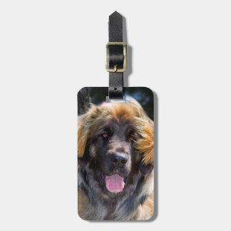 USA, California. Portrait Of Leonberger Sitting Luggage Tag