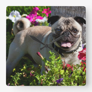 USA, California. Pug In Flower Garden Square Wall Clock