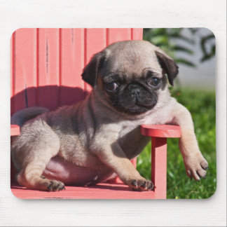 USA, California. Pug Puppy Slouching Mouse Pad