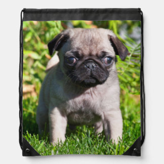 USA, California. Pug Puppy Standing In Grass Drawstring Bags