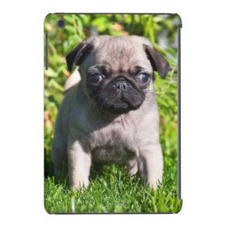 USA, California. Pug Puppy Standing In Grass iPad Mini Retina Case
