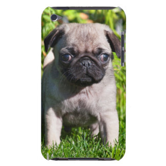 USA, California. Pug Puppy Standing In Grass iPod Touch Case