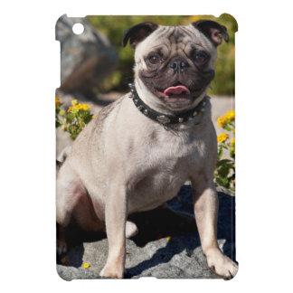 USA, California. Pug Sitting On Boulder Cover For The iPad Mini
