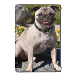 USA, California. Pug Sitting On Boulder iPad Mini Retina Case