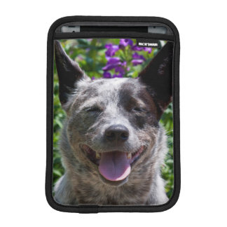 USA, California. Queensland Healer Smiling iPad Mini Sleeves