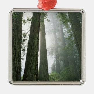 USA, California, Redwood National Park, Metal Ornament