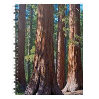 USA, California. Redwood Tree Trunks, Mariposa Notebook