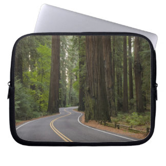 USA, California, road through Redwood forest Laptop Sleeve