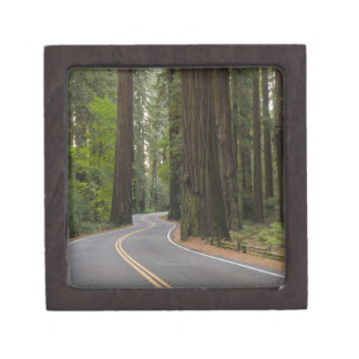 USA, California, road through Redwood forest Premium Jewelry Box