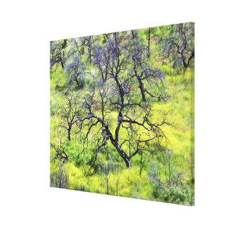 USA, California, San Diego. A burnt oak forest Canvas Prints