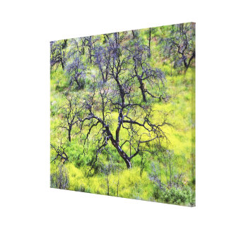 USA, California, San Diego. A burnt oak forest Gallery Wrapped Canvas