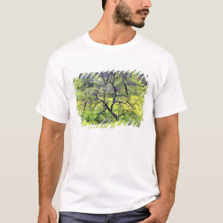 USA, California, San Diego. A burnt oak forest T-Shirt