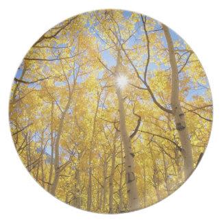 USA, California, Sierra Nevada Mountains. Fall Plate