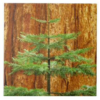 USA, California, Yosemite National Park. Young Tile