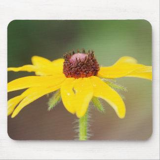 USA, Colorado, Boulder. Sunflower close-up Mouse Pad