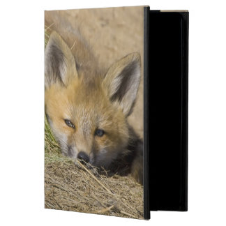USA, Colorado, Breckenridge. Alert red fox Case For iPad Air