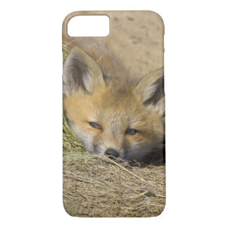 USA, Colorado, Breckenridge. Alert red fox iPhone 7 Case