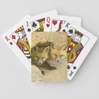 USA, Colorado, Breckenridge. Curious red fox Playing Cards