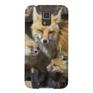 USA, Colorado, Breckenridge. Red fox mother 4 Galaxy S5 Covers