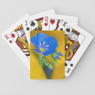 USA, Colorado. Close-up of cranesbill geranium Poker Deck