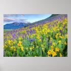 USA, Colorado, Crested Butte. Landscape Poster