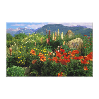 USA, Colorado, Crested Butte. Poppies and lupine Canvas Print