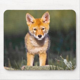 USA, Colorado, Rocky Mountain National Park Mouse Pad