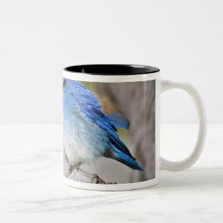 USA, Colorado, Rocky Mountain National Park, Two-Tone Coffee Mug