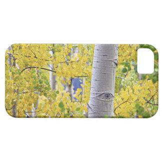 USA, Colorado, Rocky Mountains.  Intimate aspen 2 iPhone 5 Cases
