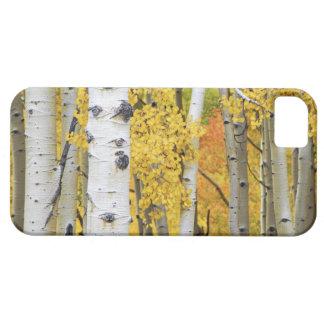 USA, Colorado, Rocky Mountains.  Intimate aspen iPhone 5 Cover