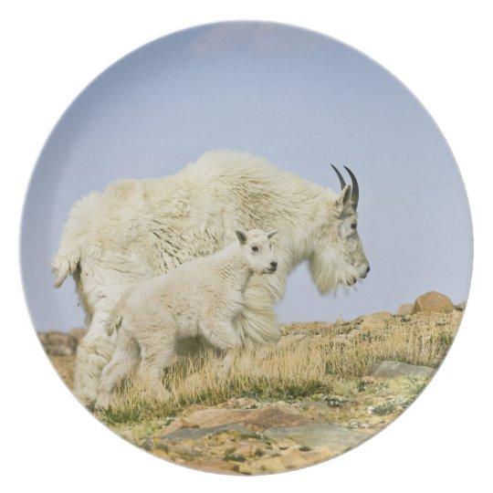 USA, Colorado, Rocky Mountains, Mount Evans, Plate