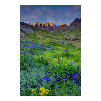 USA, Colorado. Sunrise On Wildflowers Poster