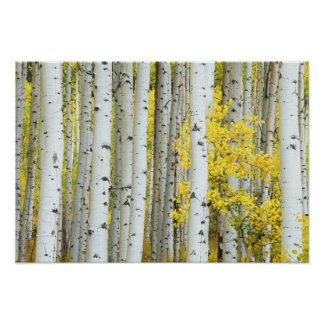 USA, Colorado, White River National Forest, Poster