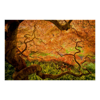 USA, Delaware, Wilmington. Japanese maple Poster
