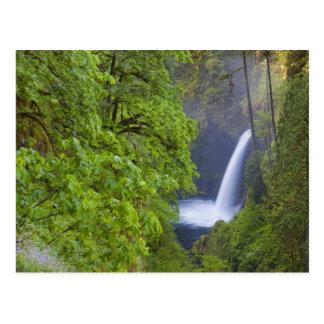 USA, Eagle Creek, Columbia Gorge, Oregon. 2 Postcard