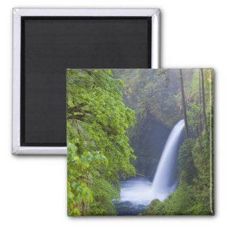 USA, Eagle Creek, Columbia Gorge, Oregon. Magnet