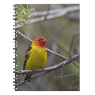 USA Ellensburg Washington Male Western Spiral Note Book