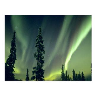 USA, Fairbanks area, Central Alaska, Aurora Postcard