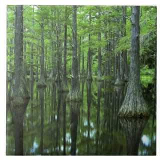 USA, Florida, Apalachicola National Forest, Bald Ceramic Tiles