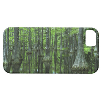 USA, Florida, Apalachicola National Forest, Bald iPhone 5 Covers