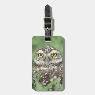 USA, Florida, Cape Coral, Burrowing Owl (Athene Luggage Tag