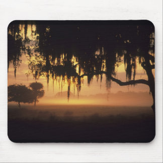 USA, Florida, Lake Kissimmee. Sunrise silhouette Mouse Pad