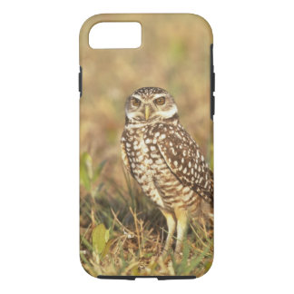 USA, Florida, Pompano Beach. A burrowing owl in iPhone 7 Case