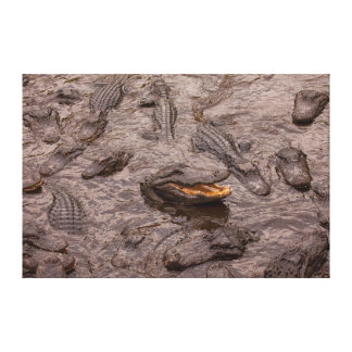 USA, Florida, St. Augustine, Alligators Canvas Print