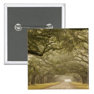 USA, Georgia, Savannah, An oak lined drive in 2 Inch Square Button