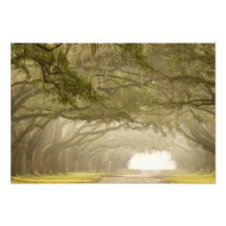 USA, Georgia, Savannah, An oak lined drive in Photo Art