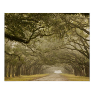 USA, Georgia, Savannah, An oak lined drive in Poster
