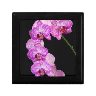 USA, Georgia, Savannah, Cluster Of Orchids 2 Jewelry Box