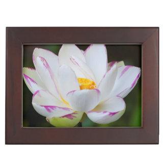 USA, Georgia, Savannah, Lootus Flower Blooming Memory Box